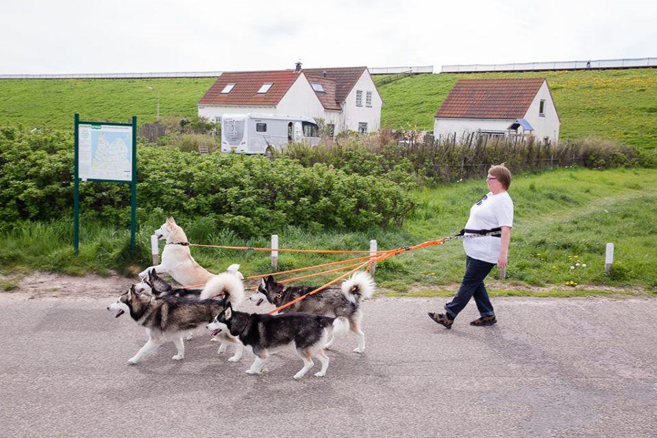 de paseo con los perros