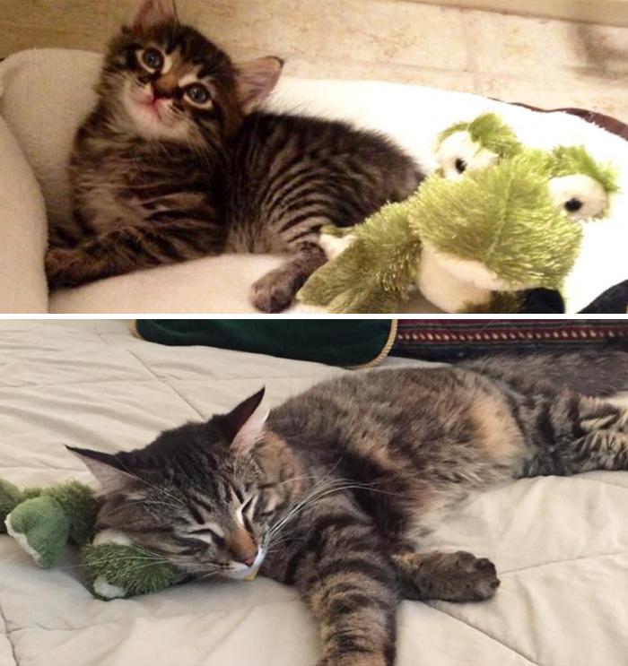 mascotas y sus juguetes 15