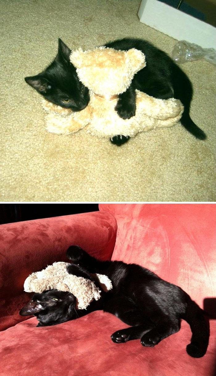 mascotas y sus juguetes 19