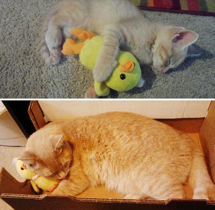 mascotas y sus juguetes 2