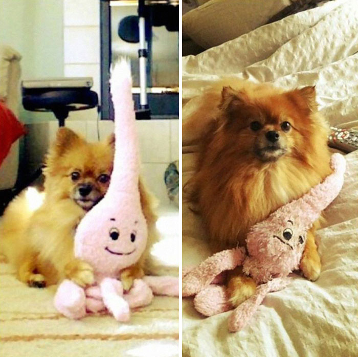 mascotas y sus juguetes 3