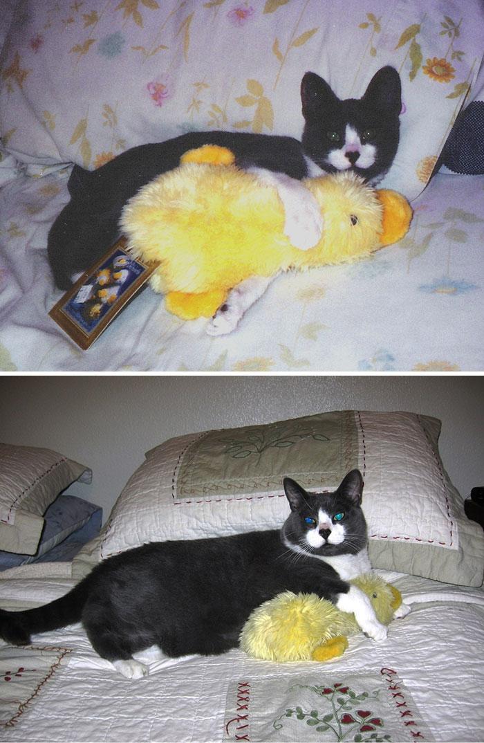 mascotas y sus juguetes 5