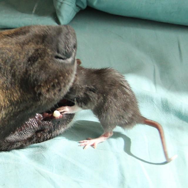 perro y rata amigos 7