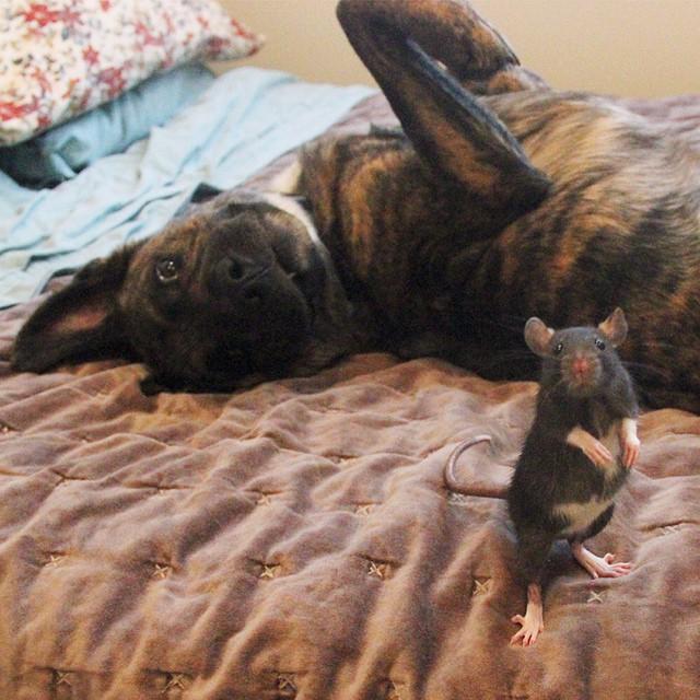 perro y rata amigos 8