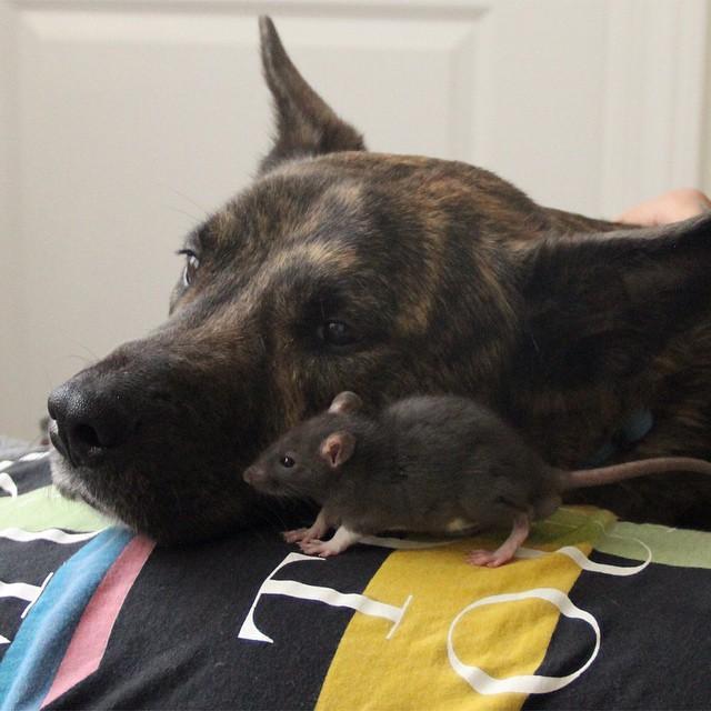 perro y rata amigos