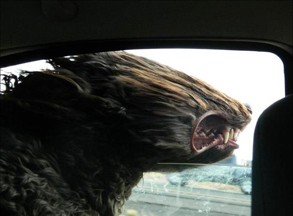 perros viajando en coche 3