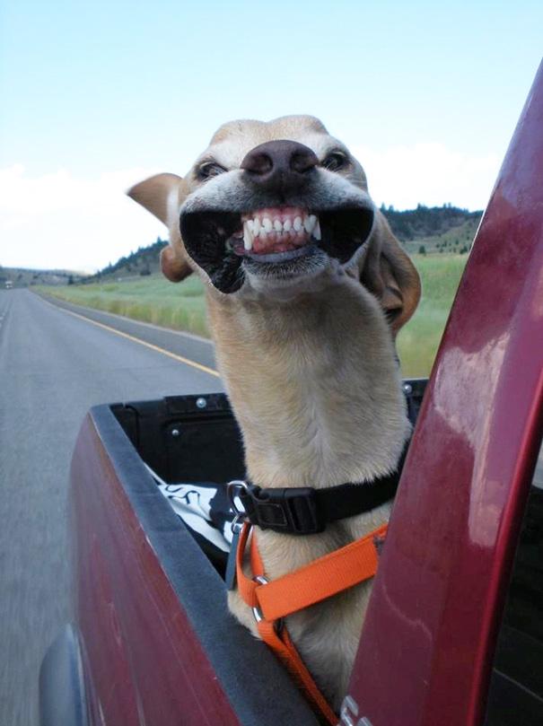 perros viajando en coche 5
