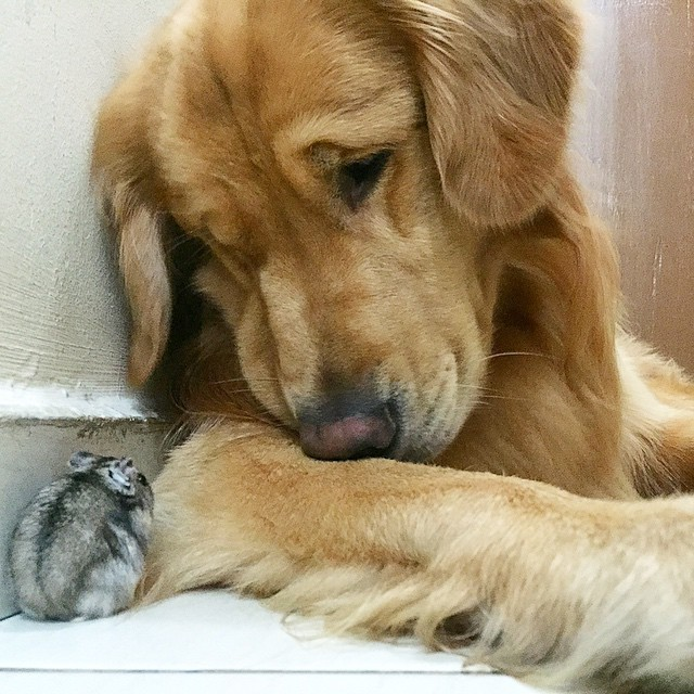 perro hamster y pajaros 12
