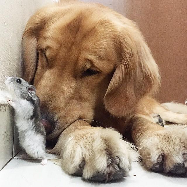 perro hamster y pajaros 13