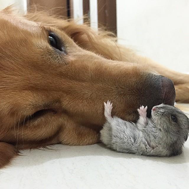 perro hamster y pajaros 18