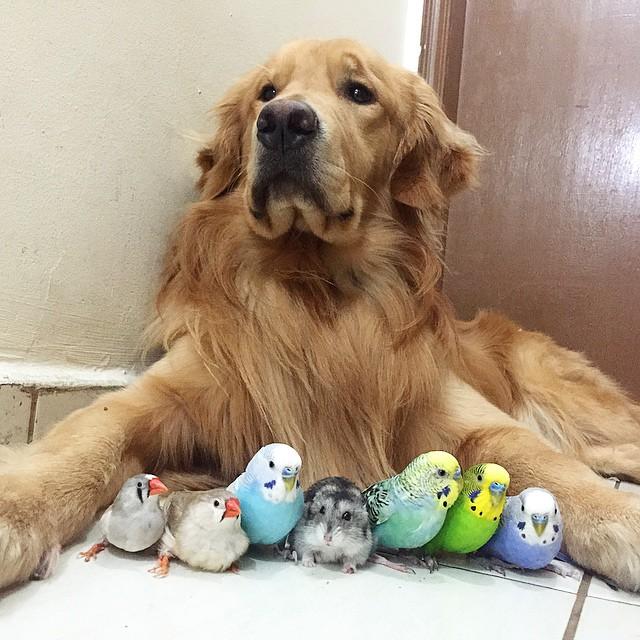 perro hamster y pajaros 3