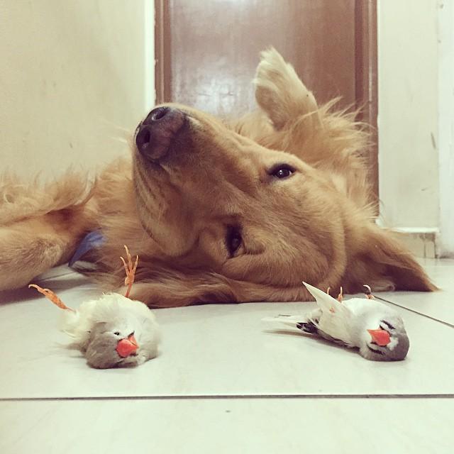 perro hamster y pajaros 8