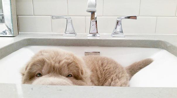 perro muy peludo 3