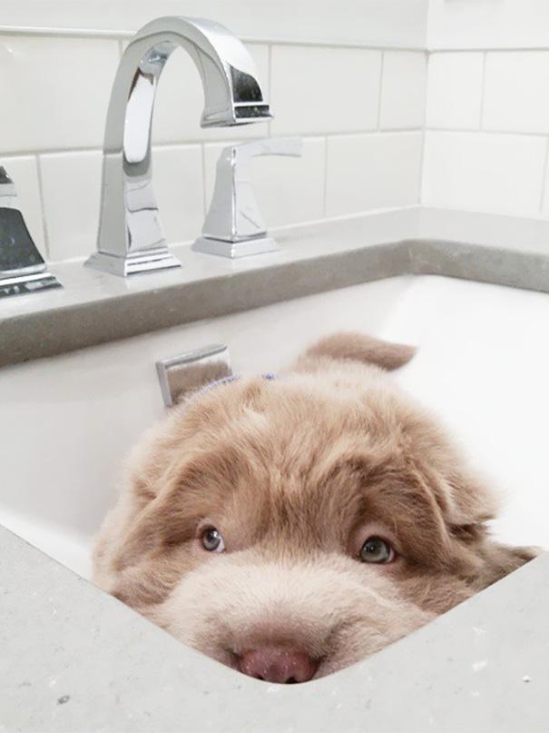 perro muy peludo 8