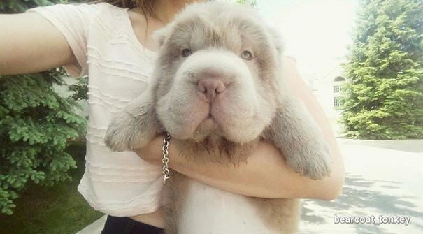 perro muy peludo