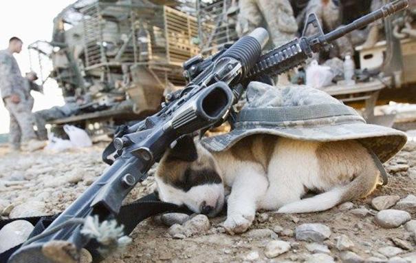 perros 7