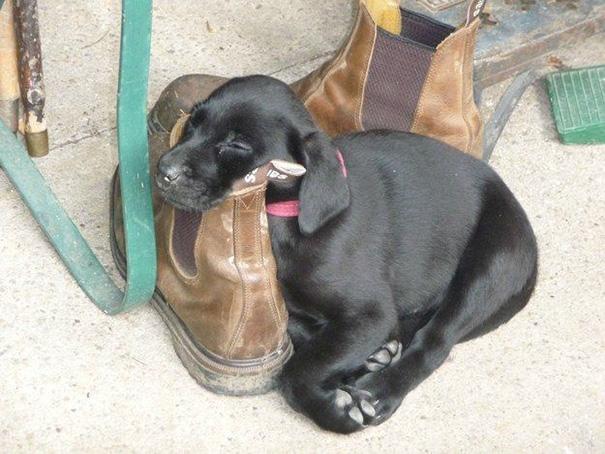 El encantador de perros es humillado yahoo dating
