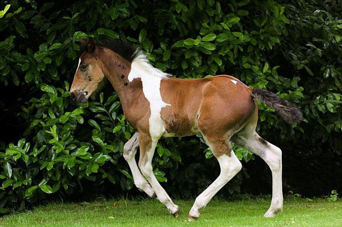 potro caballo 2