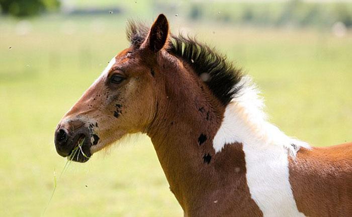 potro caballo 4