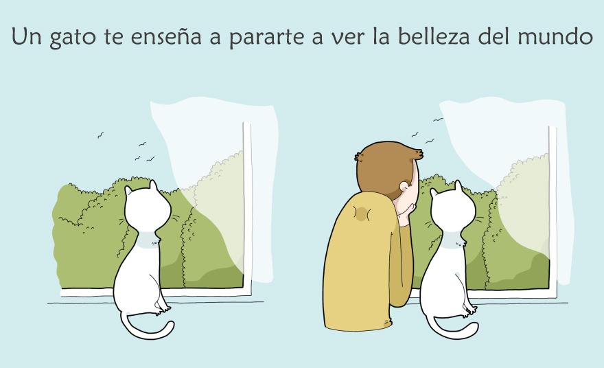 ventajas de tener un gato 5