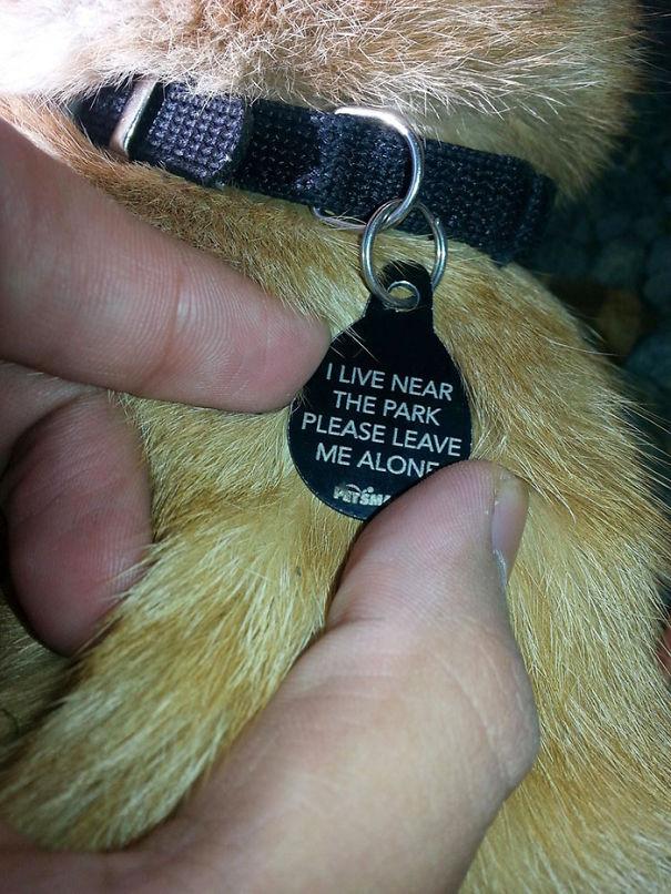 collares mascotas originales 1