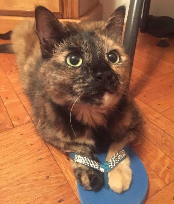 el gato con chanclas