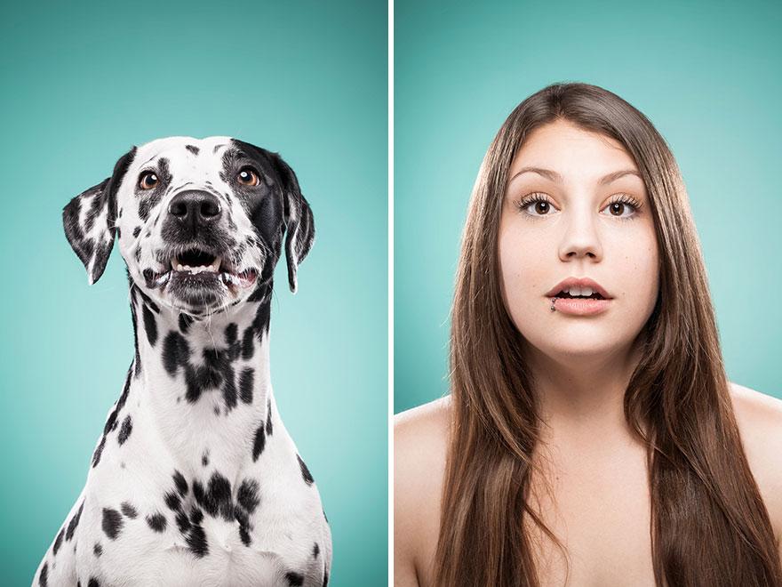 perros imitados 14