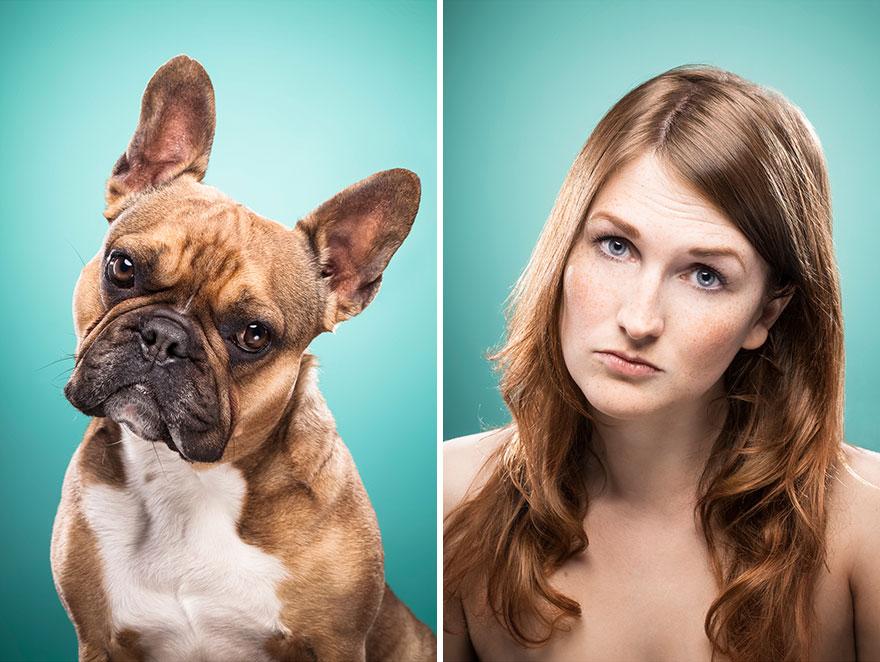 perros imitados 16