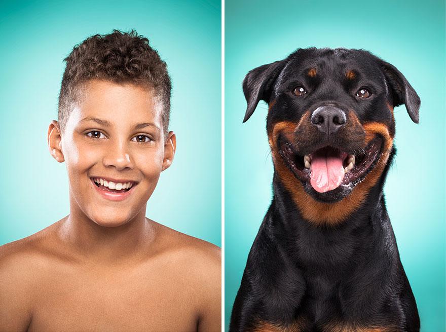 perros imitados 17