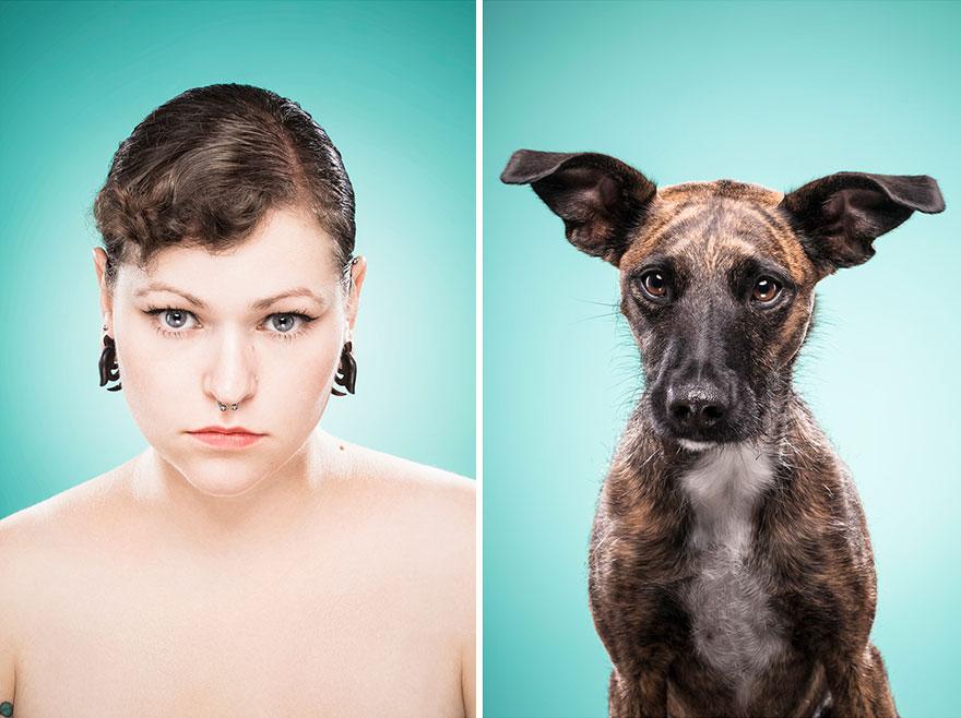 perros imitados 19