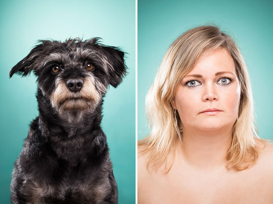 perros imitados 23