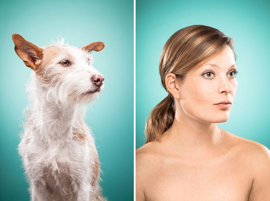 perros imitados 24