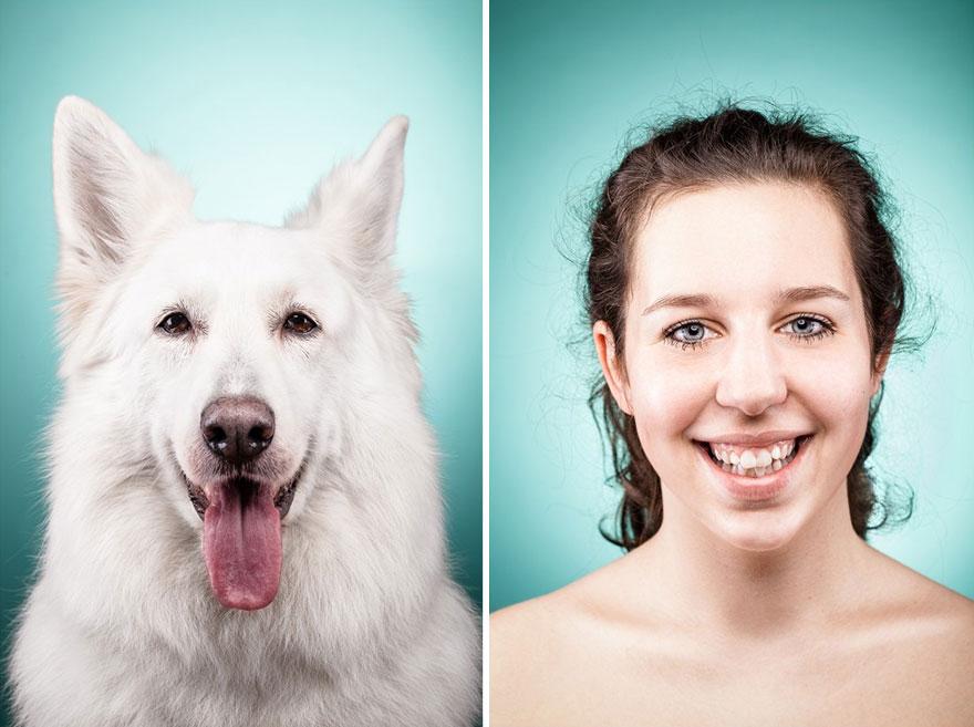 perros imitados 25