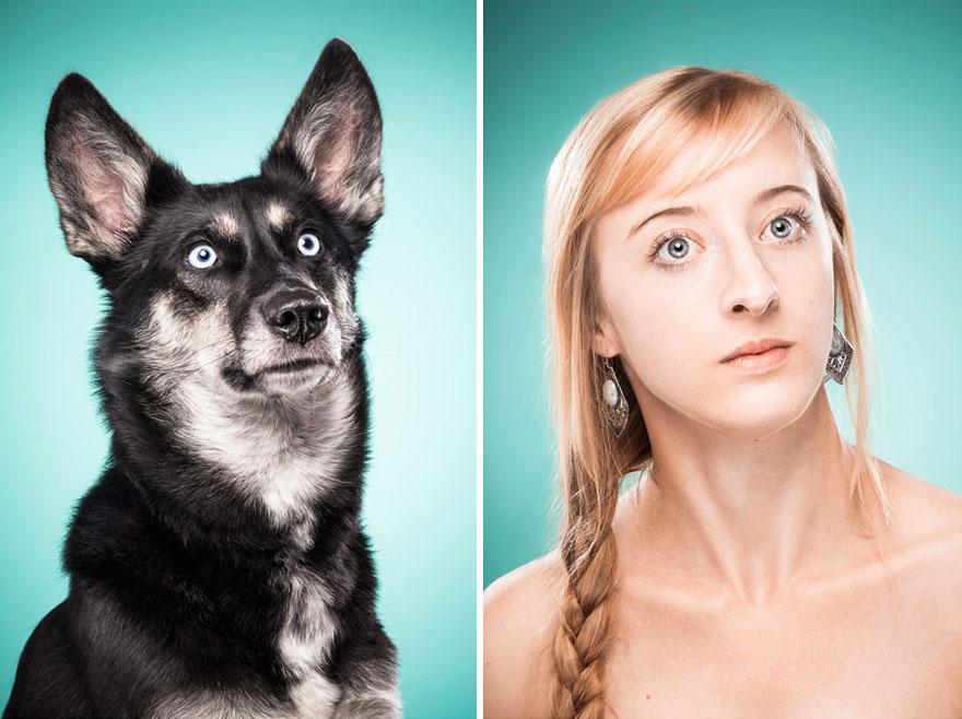 perros imitados 3