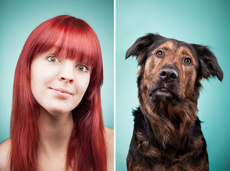 perros imitados 4