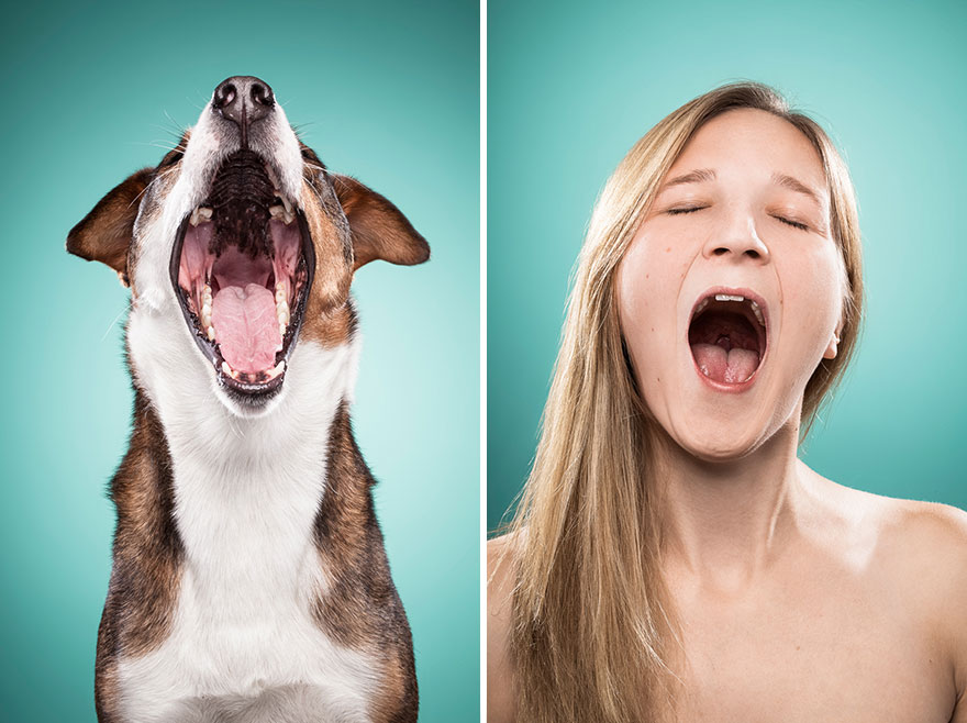 perros imitados 5