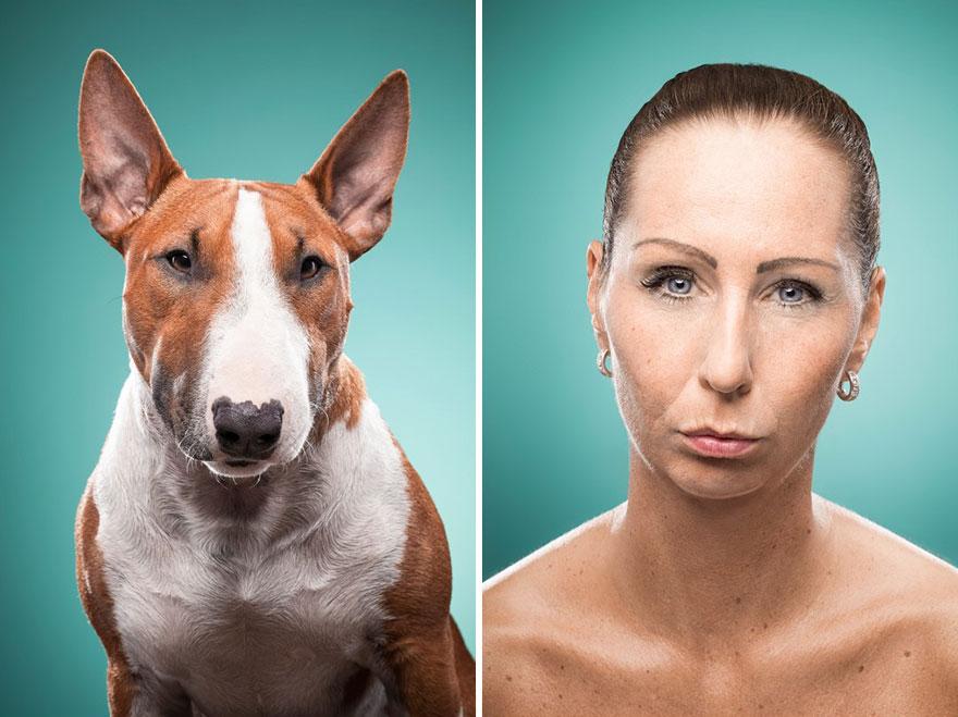 perros imitados 6