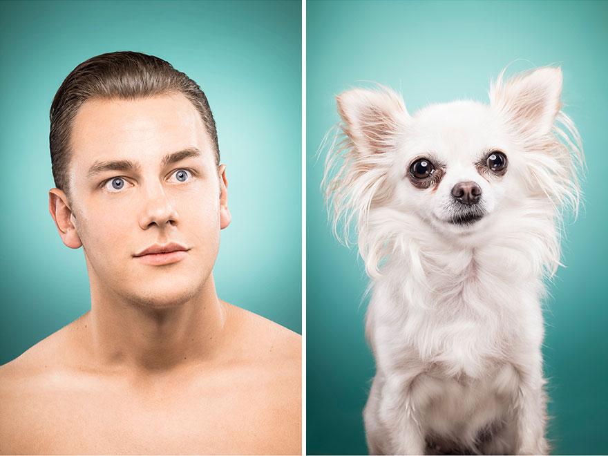 perros imitados 7