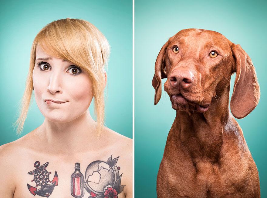 perros imitados 9