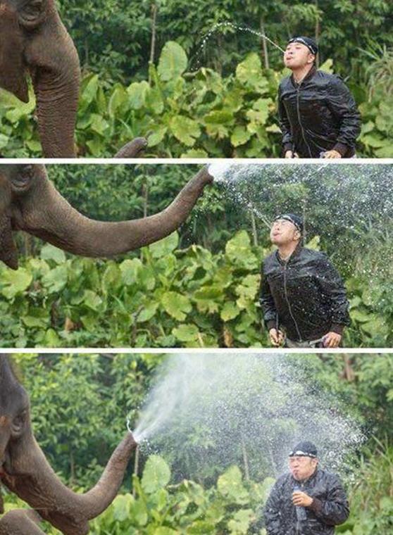 provocando a un elefante