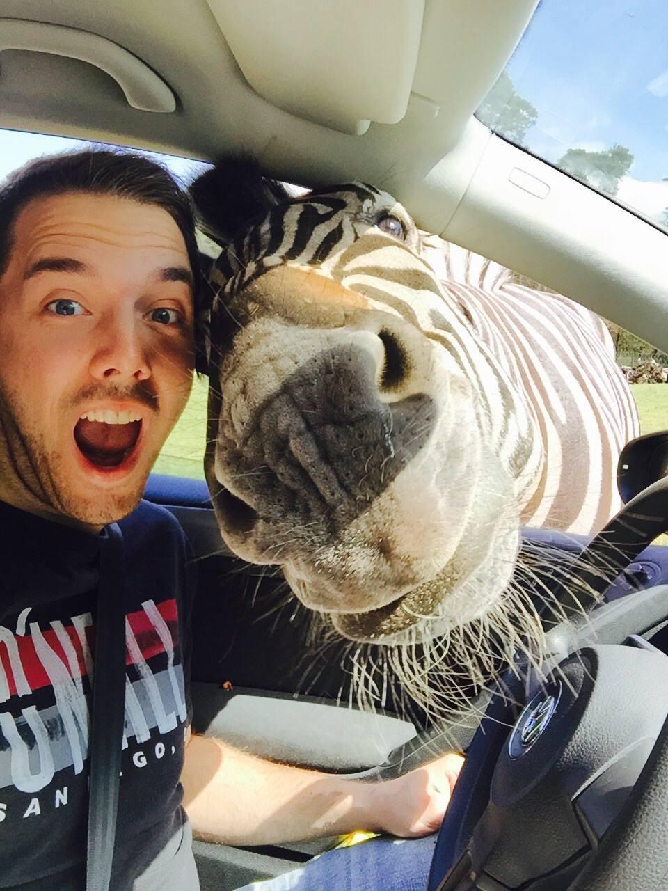 selfie cebra
