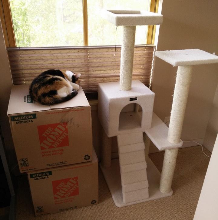 un gato siempre prefiere una caja