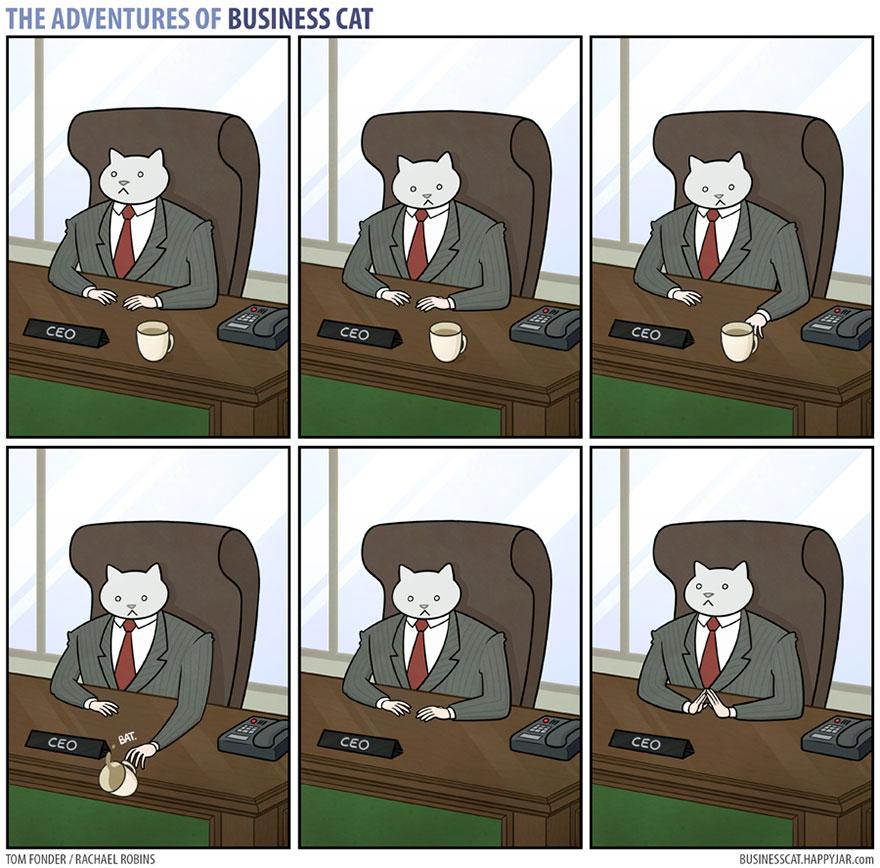 gato ejecutivo 7