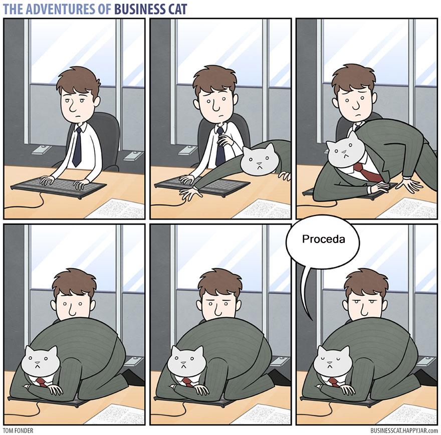 gato ejecutivo 8