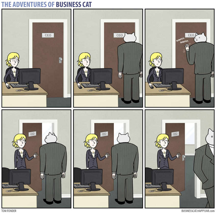 gato ejecutivo 9