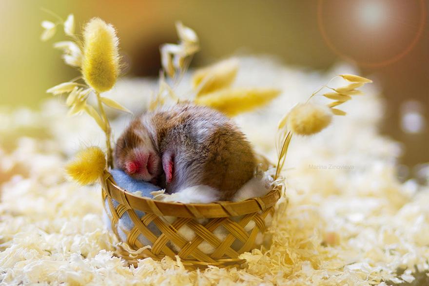 hamsters 14