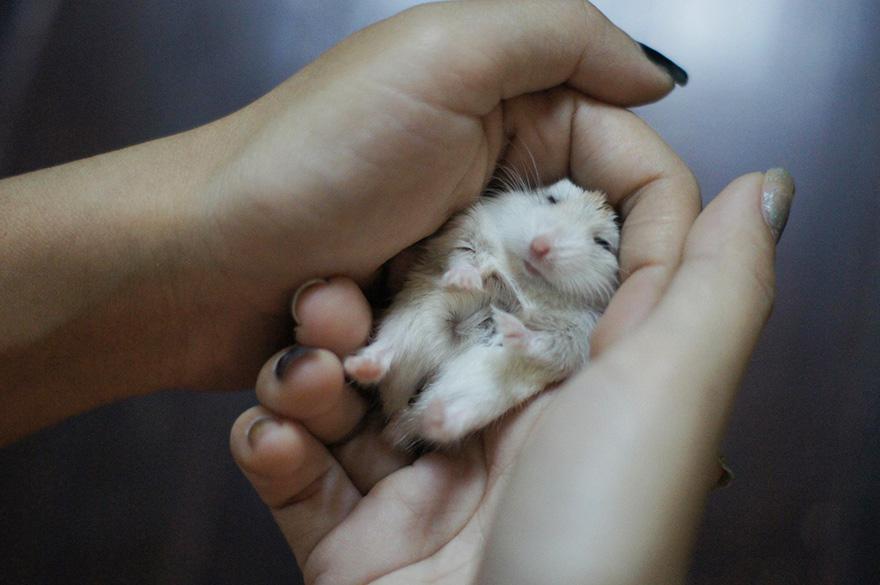 hamsters 15