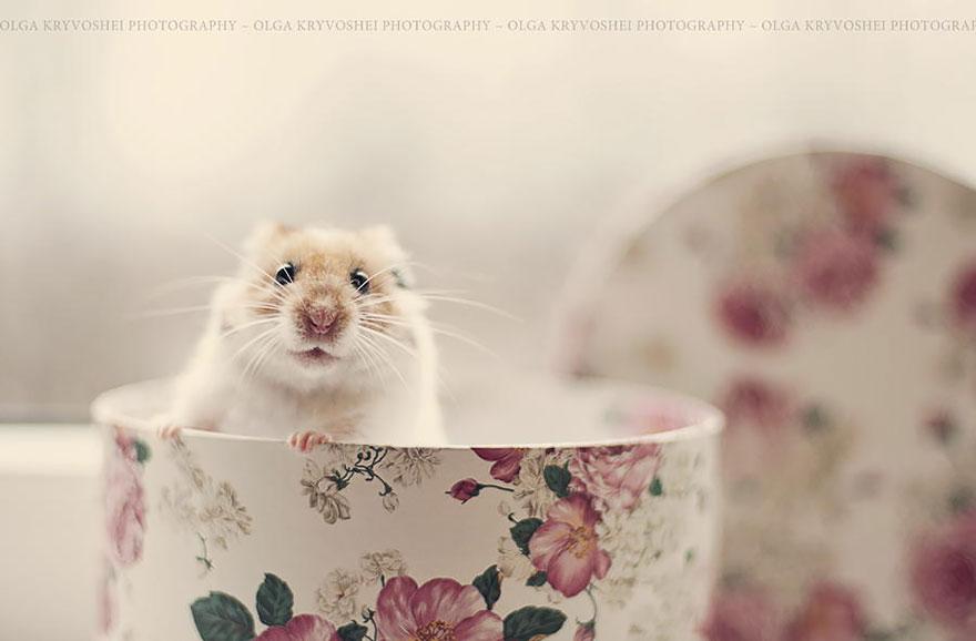 hamsters 3