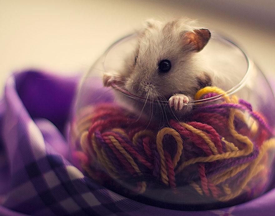 hamsters 8
