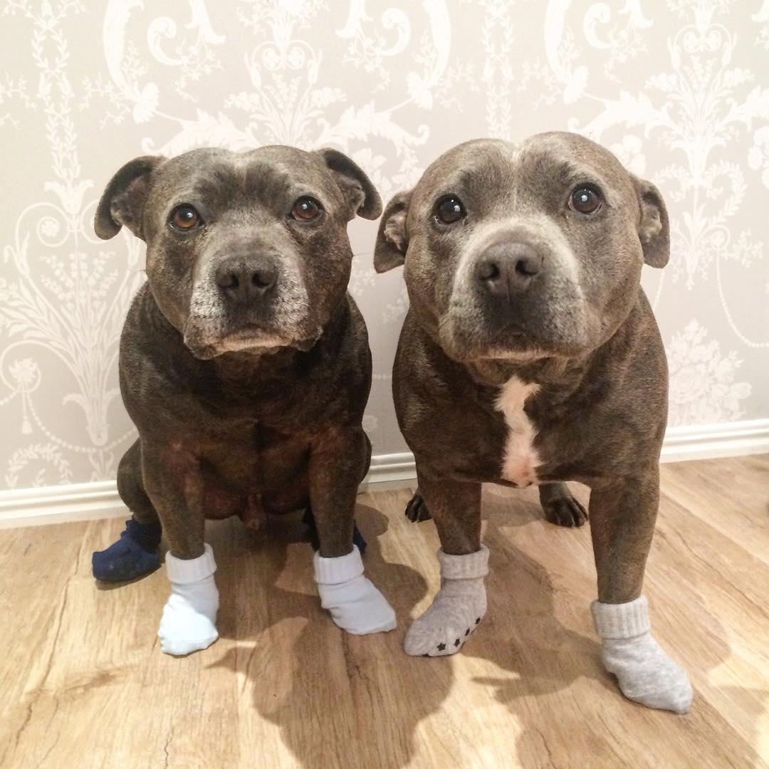 perros 2
